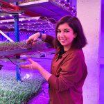 """Nebeidzamais pavasaris: ciemos mikrosalātu audzētavā """"Greenery"""""""